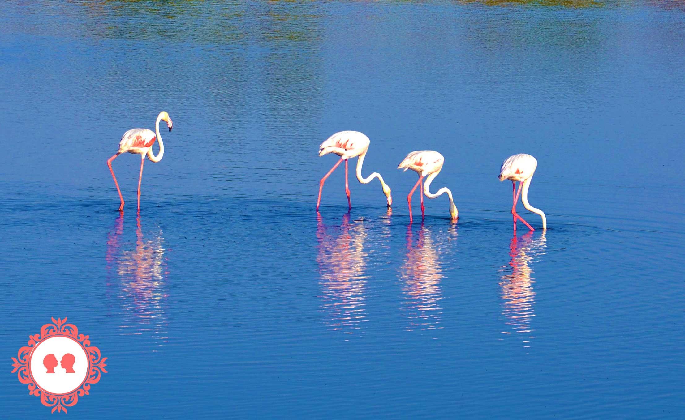 Cosa visitare in Provenza: La Camargue e i fenicotteri rosa