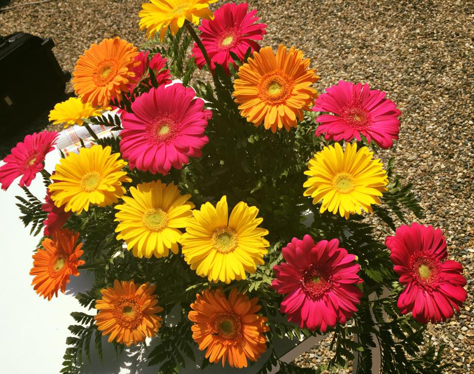fiori di matrimonio economici: le gerbere
