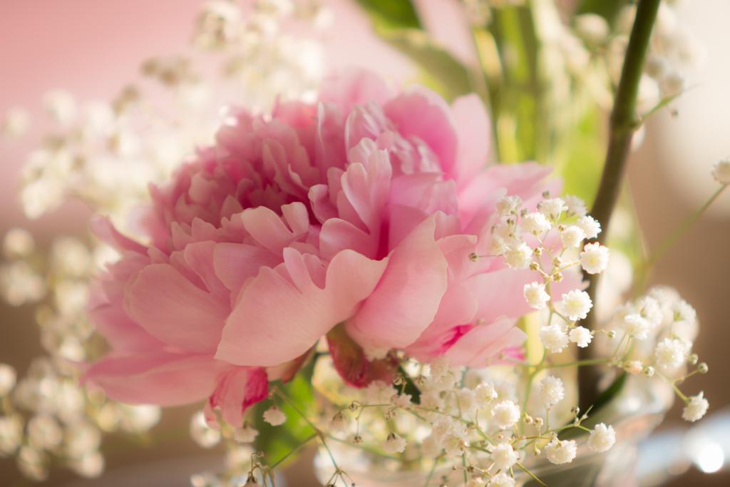 la peonia come fiore per un matrimonio giugno