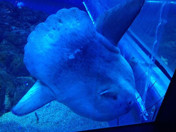 acquario Kaiyūkan Osaka