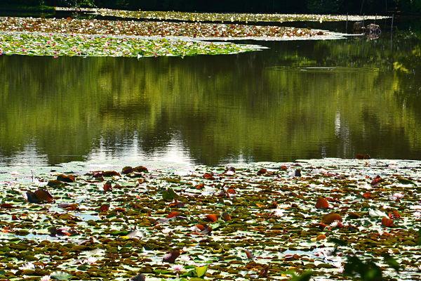 giardino padiglione d'oro kyoto